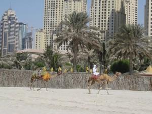Beach Camels