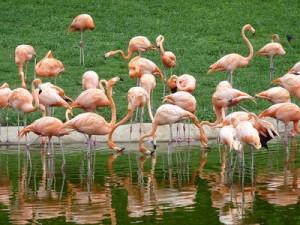 Pink Flamingos, Miami – USA