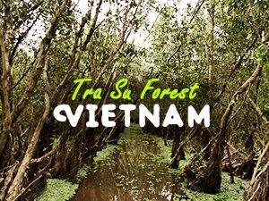 Tra Su Forest, Vietnam