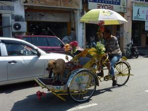 Trishaw Dog