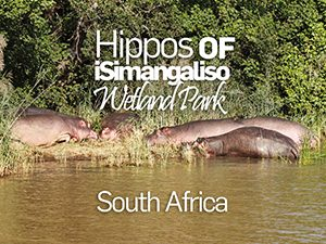 Lake St. Lucia - home to the largest hippo population in South Africa